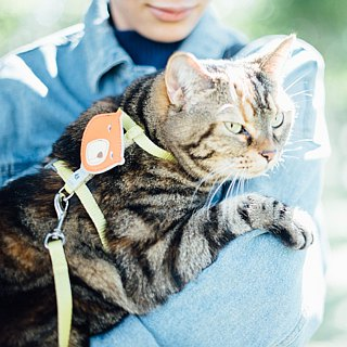 Tail with me】 【classic nylon rope with a cat tie series yellow card