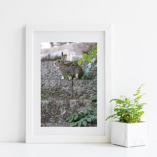 Limited rabbit photography art original - treetops gentle