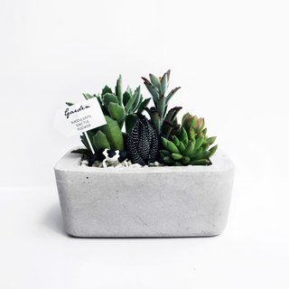 ISLAND Rounded rectangular concrete planter / pot for Succulent & Cacti