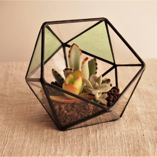 Terrarium light green