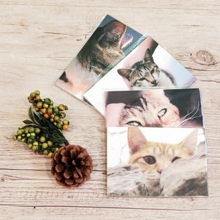 One cat . One memories in Taiwan. / postcards set