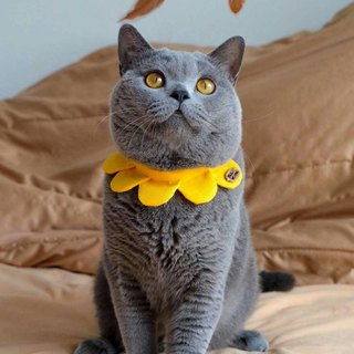 Ella Wang Design Flower petals collar pet petal collar cat and dog