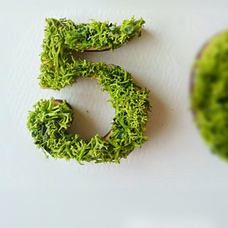 "Wooden numbers objects (Moss) 5cm ""5"" × 1 point"