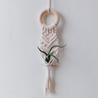 Macrame mini plant hanger | air plant