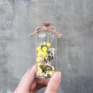 Glass tube Helichrysum French white plum dry flowers spot