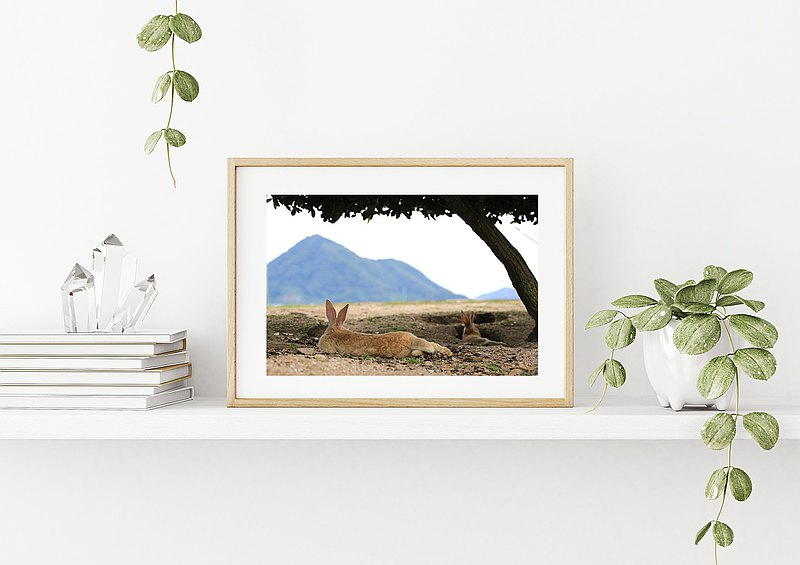 Original limited edition rabbit photography art-See Nanshan leisurely