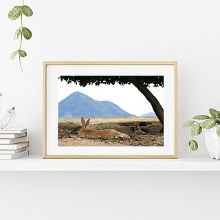 Limited rabbit photography art original - leisurely see Nanshan