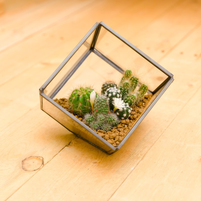 Small building cactus