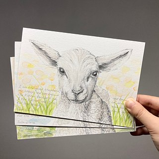 Hand painted watercolor sheep postcard