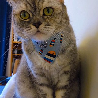 Rainbow Fish bandage collar neckband S size dogs and cats