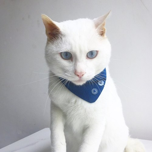 [Note] the age of vegetation dyed blue stained bandage cat stray cat charity
