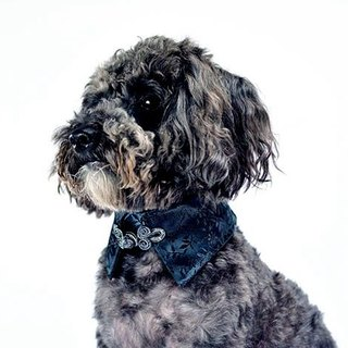 Pets sided shirt collar - Black BK (XS / S / M / L)