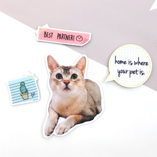 Customized pet hair/felt magnets
