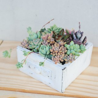 Peas succulents and small groceries - antique drawers and meaty combination