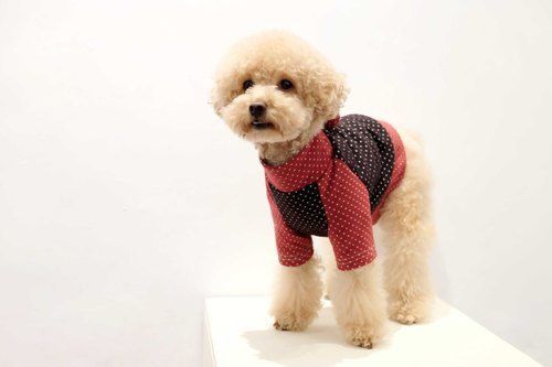 chacha.metyou little black and red stitching tweeted Top | meow dog hair children