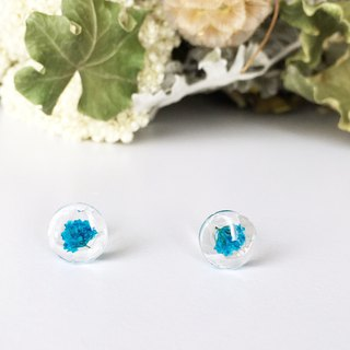 Stud earrings for pierced ears contained blue babys breath (10mm)
