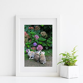 Limited rabbit photography art original - wait and see