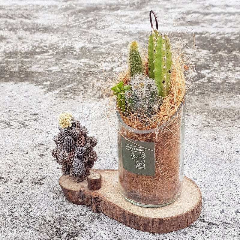 Infrequent oases in the desert ( Transparent with Succulents )