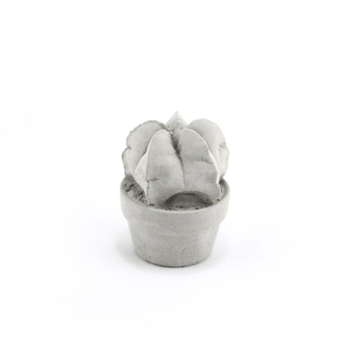 Cement Succulent Decoration - Free-pouring cement fleshy pot - 鸾 玉 玉