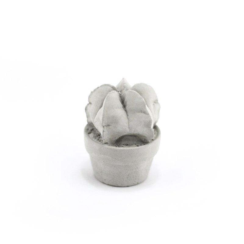 Cement Succulent Decoration - 免澆水泥多肉盆栽-鸞鳳玉