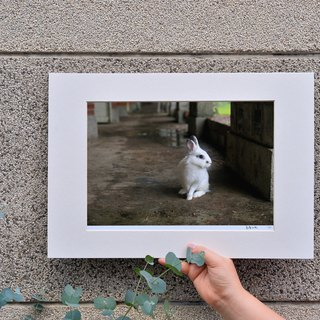 Limited rabbit photography art original - Staring moment