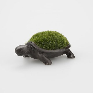Healing planted pot turtle