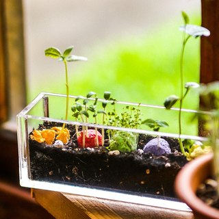 Little Balcony~ Colored Seed balls Garden Gift Set