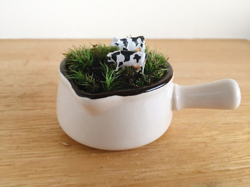 Animal dairy cows on a pure natural grassland giving a dwarf white porcelain potted moss plant micro landscape animal micro landscape