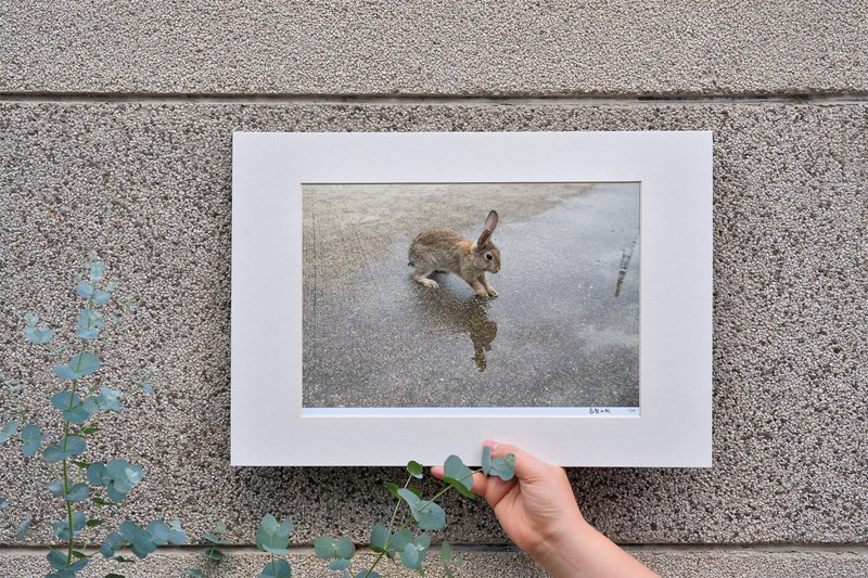 Limited Rabbit Photo Art Original - Reflection