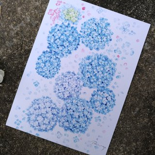 Blue and Purple Hydrangea Watercolor Postcard (Print)