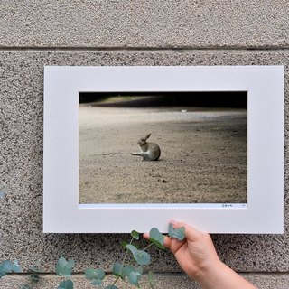 Limited rabbit photography art original - solo