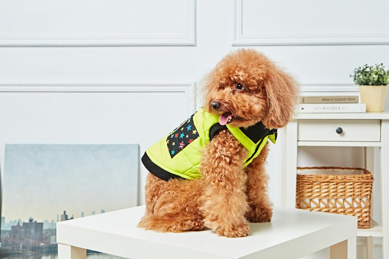 [Duke of Mao] pet clothes shop cotton lapel vest fluorescent green