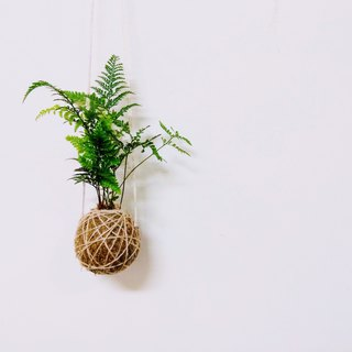 [Moss Ball - Wall Mount]
