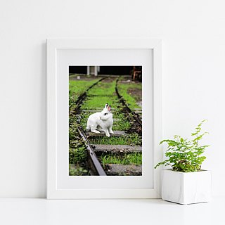 Limited rabbit photography art original - decided