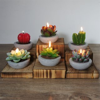 Plant Citronella Candle Collection - 6 pack