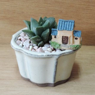 Japanese small potted ‧ succulent