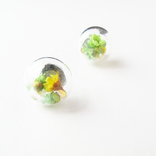 *Rosy Garden*Dried Daisies with crystals inside earrings (Green)