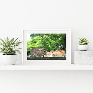 Limited rabbit photography art original - kiss