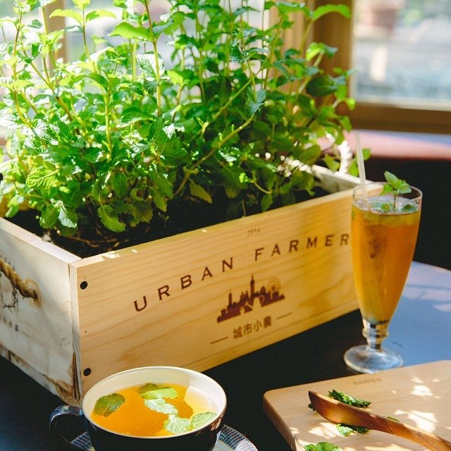 Urban Small Farmer Cultivation Group-Herb Garden / Herb Plant