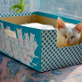 cat cat cat pet box box carton successful green burst