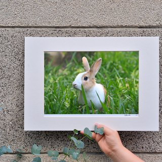 Limited rabbit photography art original - Yang
