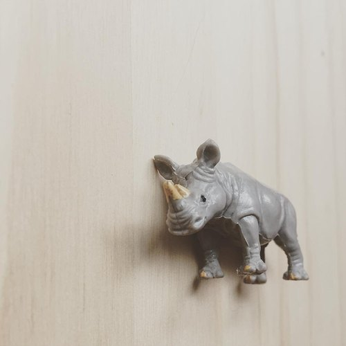 Animal magnet Rhino