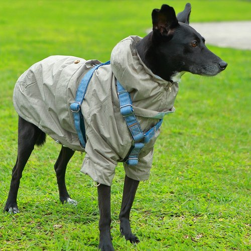 Waterproof and breathable cool feeling pet raincoat - khaki