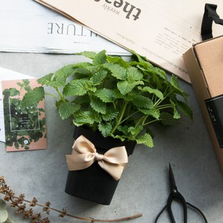 Lemon balm - Vanilla pot gift