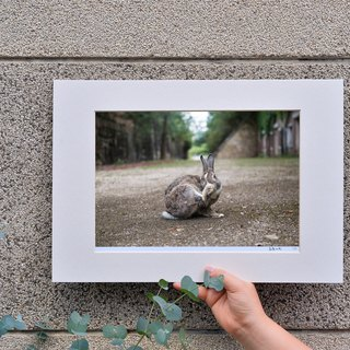 Limited rabbit photography art original - playful