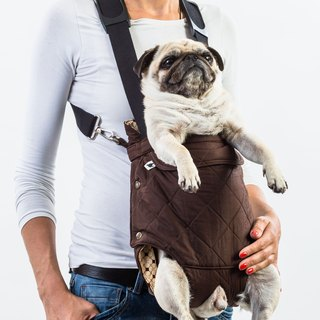 Dog front carrier RUSTY