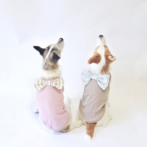 Cool-feel Materials Dog Shirt / Ribbon