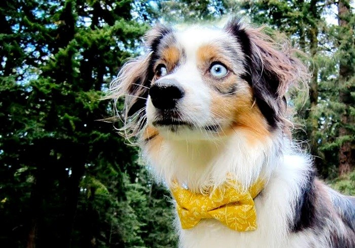Line Drawing Floral Bow Tie Dog Collar - yellow