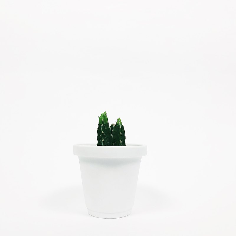 Simple frosted mini succulent cactus plant ceramic flowerpot - chalk white