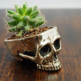 Skull pots cactus small potted plants in White bronze silver color